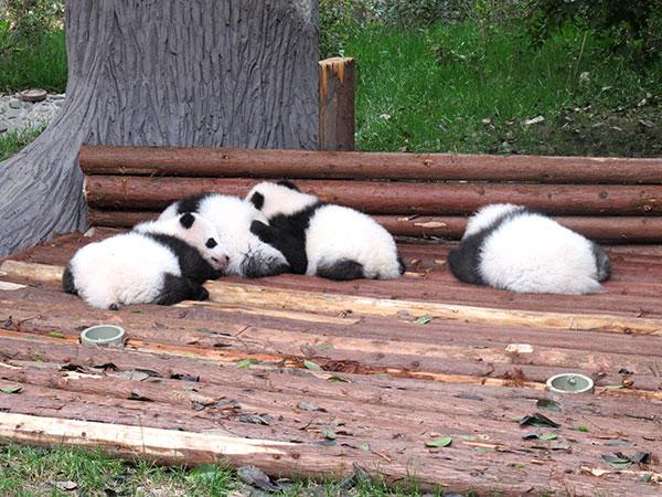 Le meilleur itinéraire à Chengdu pendant 4 jours