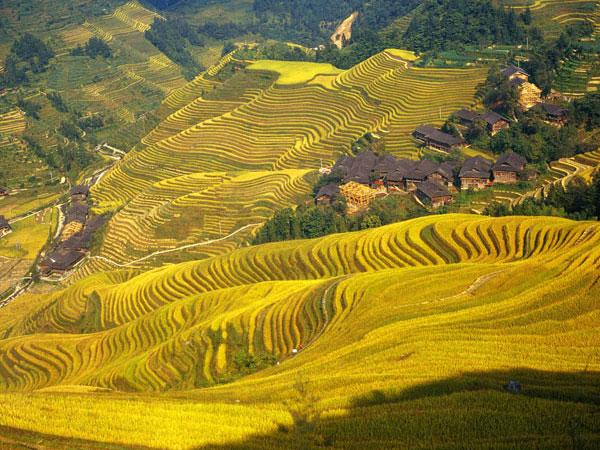 Champs en terrasses de Guilin Longji