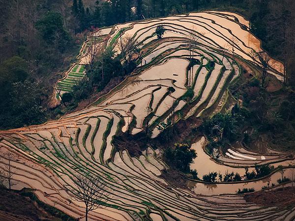 Visite de 7 jours pour les rizières en terrasses de Yuanyang